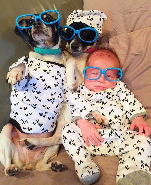 4 gossos, 1 gat i un bebè!