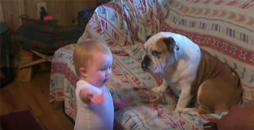 Parlant amb un Bulldog