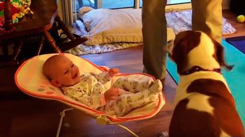 Bebès rient amb els gossos