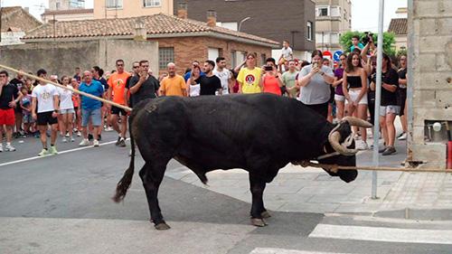 Santa Bàrbara deixa d'organitzar el bou capllaçat infantil després d'una denúncia d'AnimaNaturalis