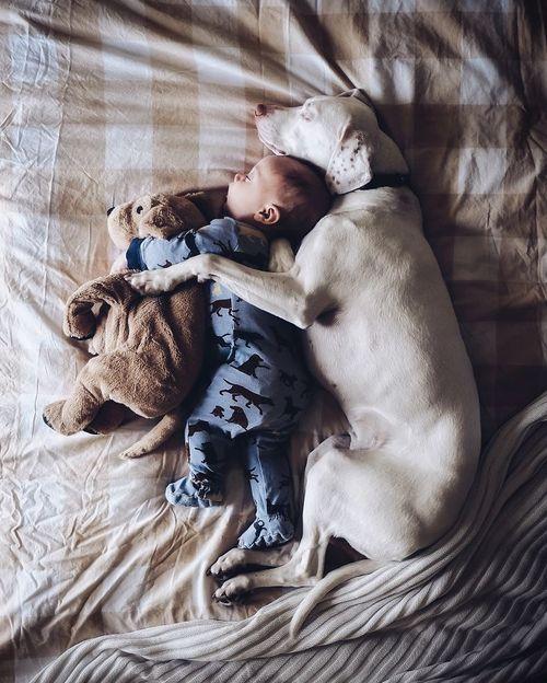 La millor companyia per dormir