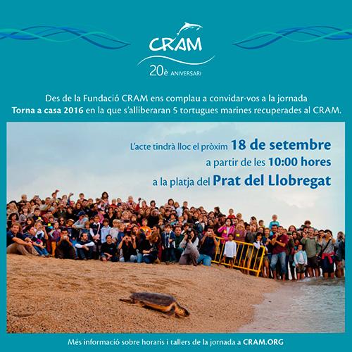 Torna a casa 2016': alliberació de 5 tortugues marines amb el CRAM