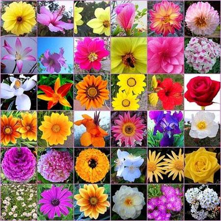 Flors de Bach