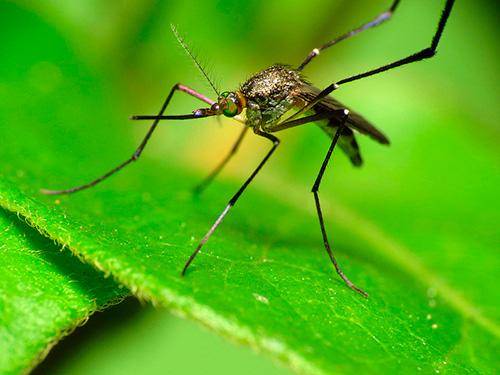 Virus de Zika i embaràs: Preguntes i respostes