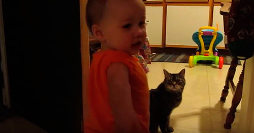 Parlant amb el gat