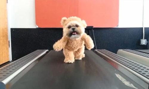 Un ós de peluix fent exercici